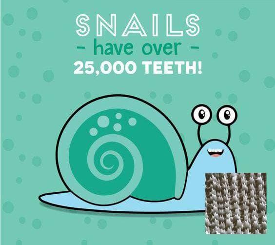 Знали ли Вы, что у улиток 25000 зубов ?!